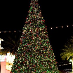 Tree at Destin Commons