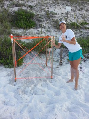 turtle nesting sites Destin FL