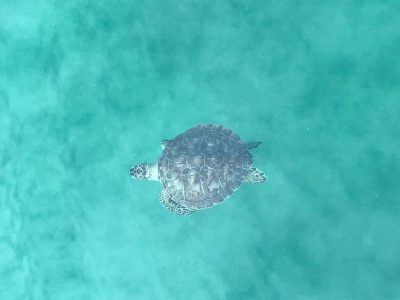 Destin Premium Charters - Sea Turtle