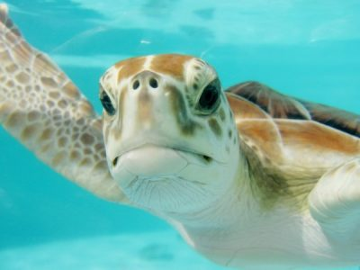 How to Keep Sea Turtles Safe